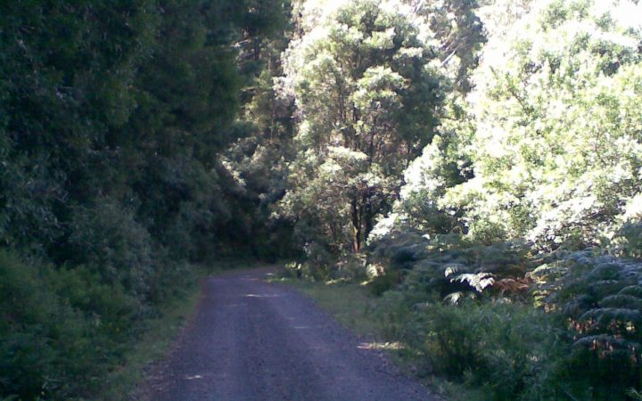 Mt Macedon Madness