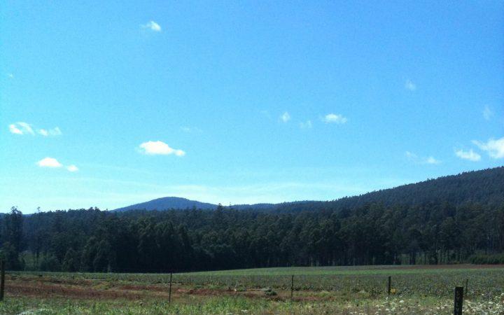 Toolangi Hills