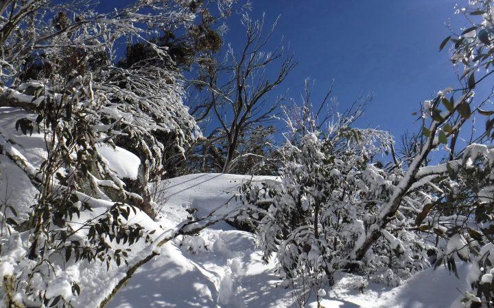Torbreck Snow Hike